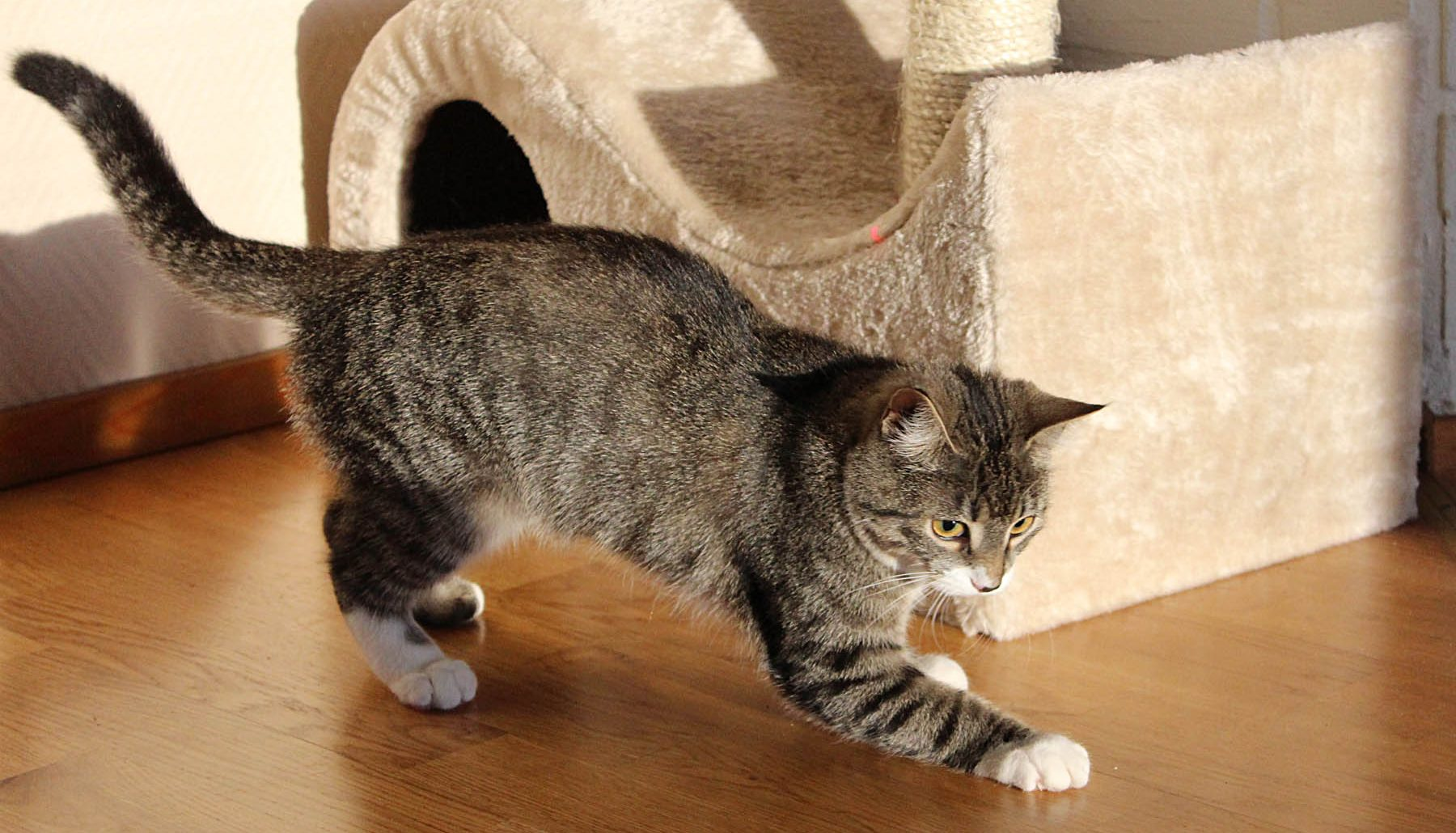 Updated The Best Cat Scratch Posts For Indoor Cats In