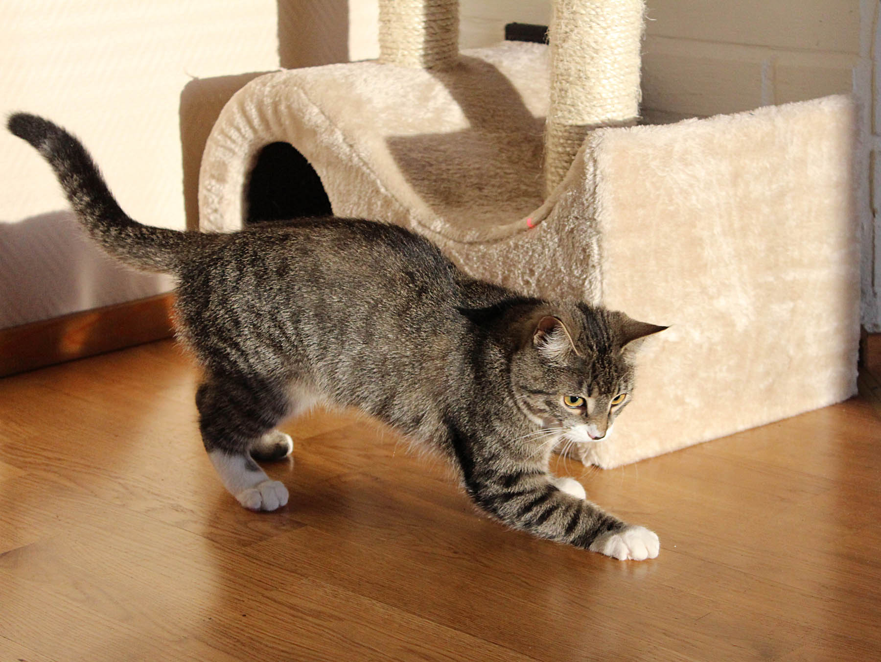 Updated The Best Cat Scratch Posts Best For Cats
