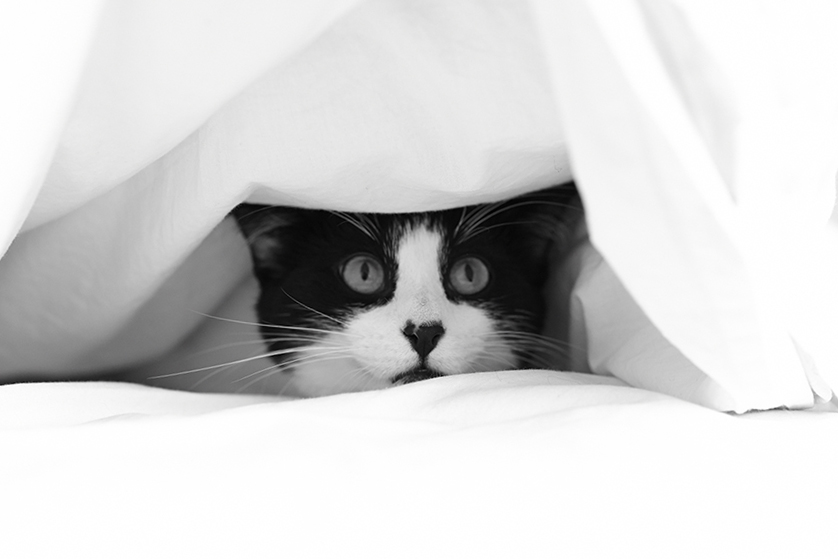 Guest Post 3 Easy Ways To Train A Scaredy Cat Best For Cats