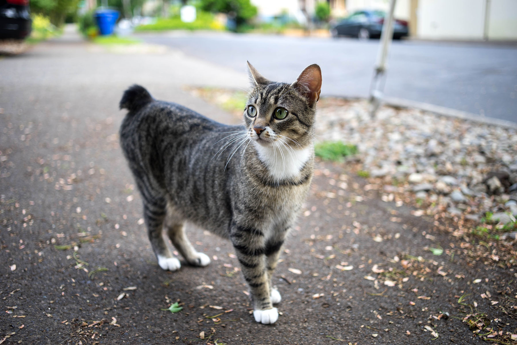 June Is National Microchipping Month Best For Cats